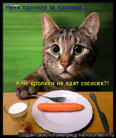 Котоматрица: Меня приняли за кролика... А чё кролики не едят сосисек?!