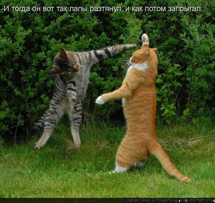 Котоматрица: -И тогда он вот так лапы разтянул, и как потом запрыгал...
