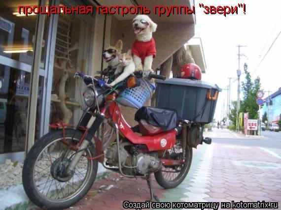 """Котоматрица: прощальная гастроль группы """"звери""""!"""