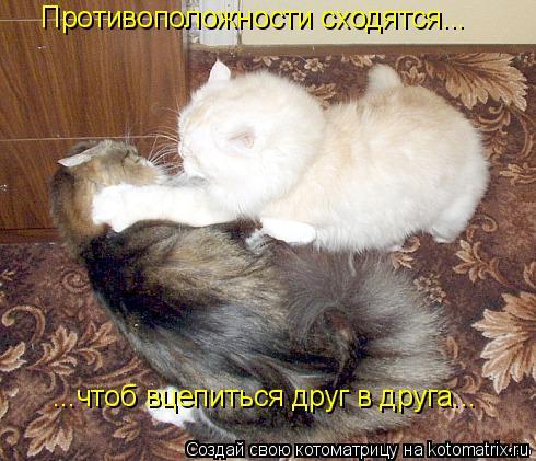 Котоматрица: Противоположности сходятся... ...чтоб вцепиться друг в друга...