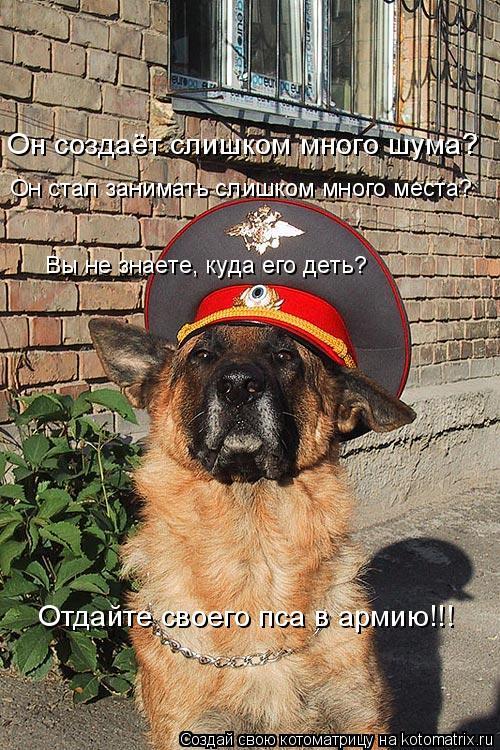 Котоматрица: Он создаёт слишком много шума? Он стал занимать слишком много места? Вы не знаете, куда его деть? Отдайте своего пса в армию!!!