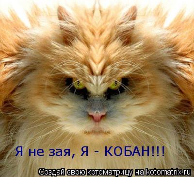 Котоматрица: Я не зая, Я - КОБАН!!!