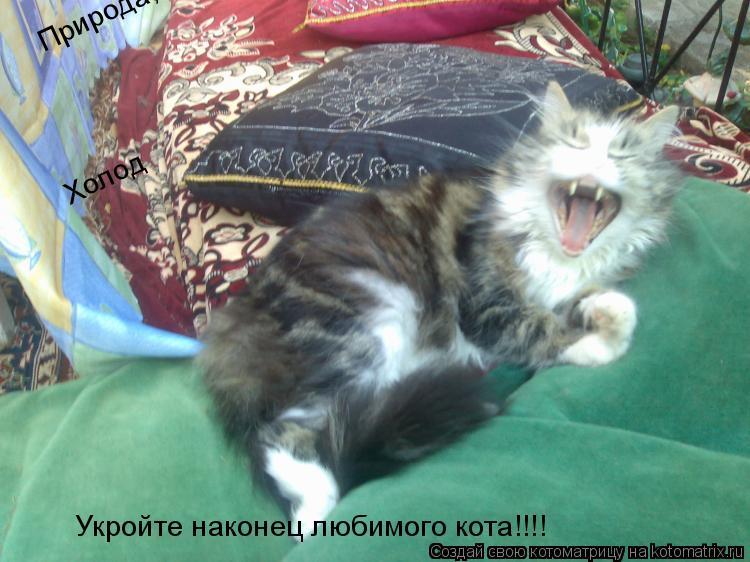 Котоматрица: Природа,холод,укройте наконец любимого кота!!!!! Холод Укройте наконец любимого кота!!!!