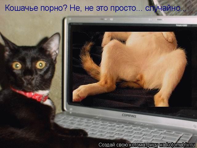 Котоматрица: Кошачье порно? Не, не это просто... случайно...