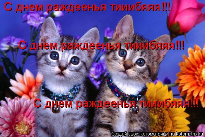 Котоматрица: С днем раждеенья тииибяяя!!! С днем раждеенья тииибяяя!!! С днем раждеенья тииибяяя!!!