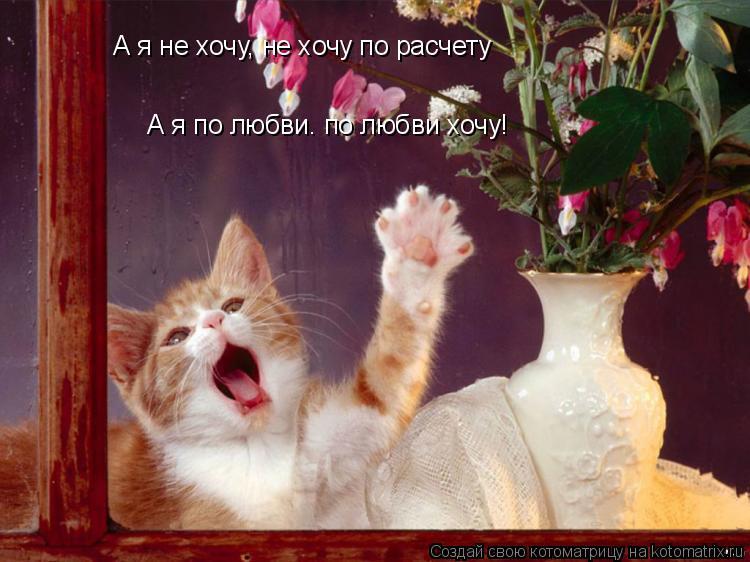 Котоматрица: А я не хочу, не хочу по расчету А я по любви. по любви хочу!