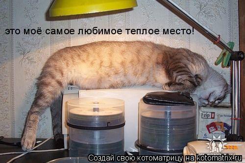 Котоматрица: это моё самое любимое теплое место!