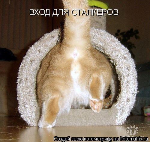 Котоматрица: ВХОД ДЛЯ СТАЛКЕРОВ