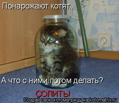 Котоматрица: Понарожают котят... А что с ними потом делать? СОЛИТЬ!