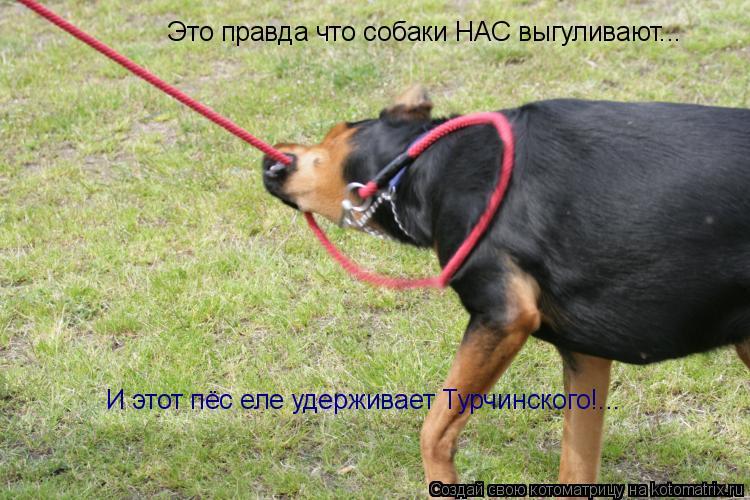 Котоматрица: Это правда что собаки НАС выгуливают... И этот пёс еле удерживает Турчинского!...