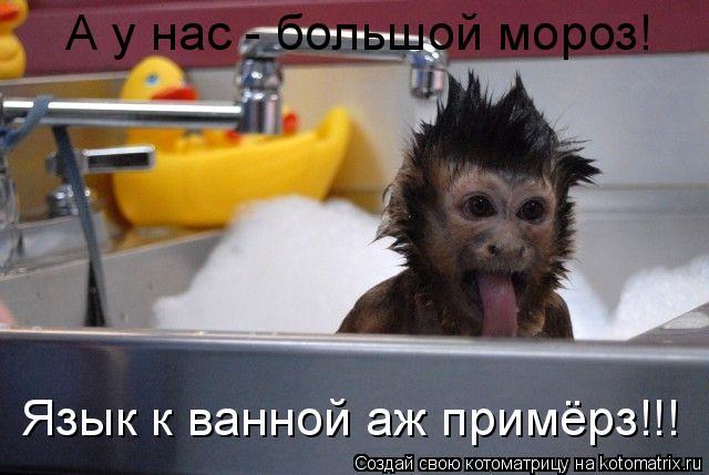 Котоматрица: А у нас - большой мороз! Язык к ванной аж примёрз!!!
