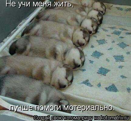 Котоматрица: Не учи меня жить, лучше помоги мотериально.