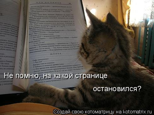 Котоматрица: Не помню, на какой странице остановился?