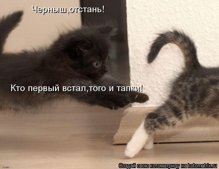 Котоматрица: Черныш,отстань! Кто первый встал,того и тапки!