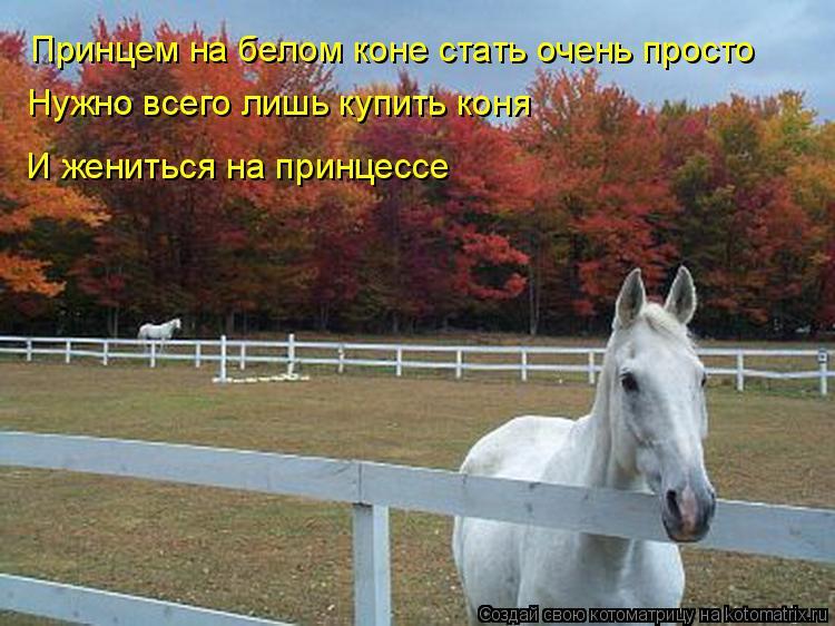 Котоматрица: Принцем на белом коне стать очень просто Нужно всего лишь купить коня И жениться на принцессе