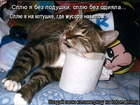 Котоматрица: Сплю я без подушки, сплю без одияла... Сплю я на котушке, где мусора навалом...