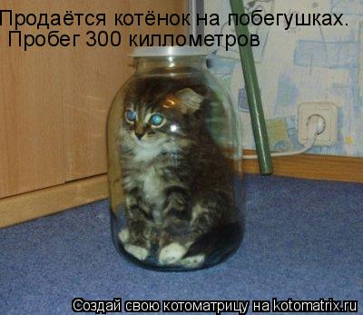 Котоматрица: Продаётся котёнок на побегушках. Пробег 300 киллометров