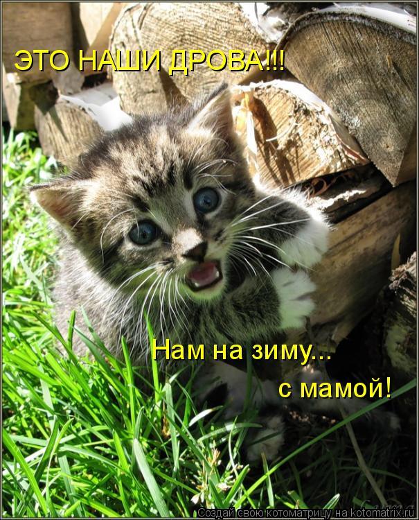 Котоматрица: ЭТО НАШИ ДРОВА!!! Нам на зиму... с мамой!