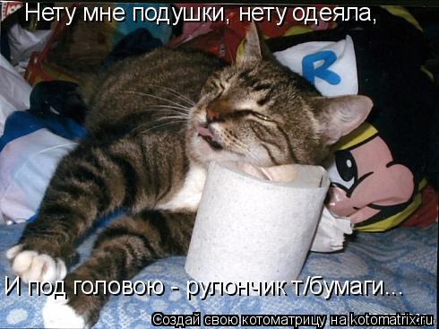 Котоматрица: Нету мне подушки, нету одеяла, И под головою - рулончик т/бумаги...