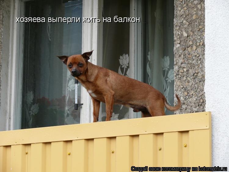 Котоматрица: хозяева выперли жить на балкон