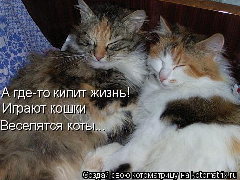 Котоматрица: А где-то кипит жизнь! Играют кошки Веселятся коты...