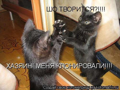 Котоматрица: ШО ТВОРИТСЯ?!!!! ХАЗЯИН! МЕНЯ КЛОНИРОВАЛИ!!!!