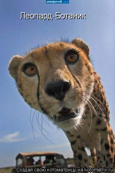 Котоматрица: Леопард-Ботаник
