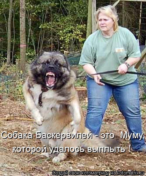 Котоматрица: Собака Баскервилей - это  Муму, которой удалось выплыть !
