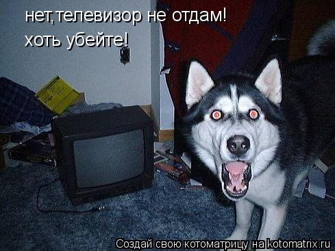 Котоматрица: нет,телевизор не отдам! хоть убейте!