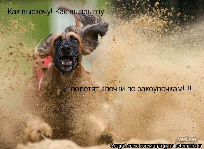 Котоматрица: Как выскочу! Как выпрыгну! И полетят клочки по закоулочкам!!!!!