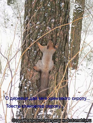 Котоматрица: О деревце дай мне хренового сиропу... Тоесть клиновово сиропу...