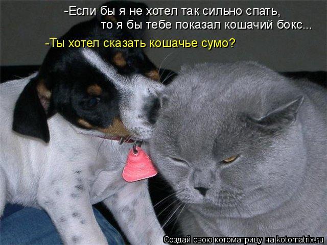 Котоматрица: -Если бы я не хотел так сильно спать, то я бы тебе показал кошачий бокс... -Ты хотел сказать кошачье сумо?