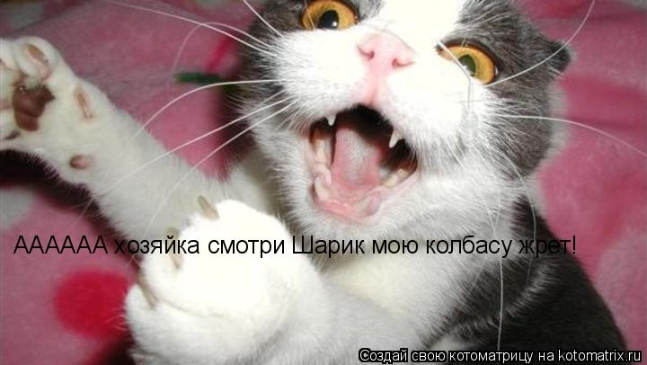 Котоматрица: АААААА хозяйка смотри Шарик мою колбасу жрет!