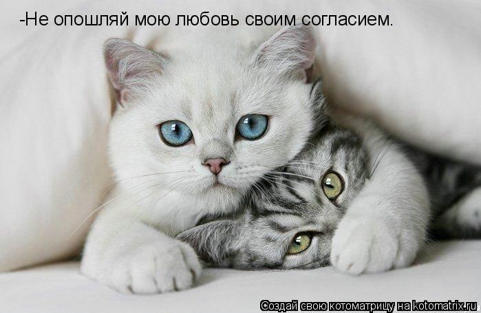 Котоматрица: -Не опошляй мою любовь своим согласием.