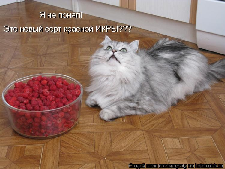 Котоматрица: Я не понял! Это новый сорт красной ИКРЫ???