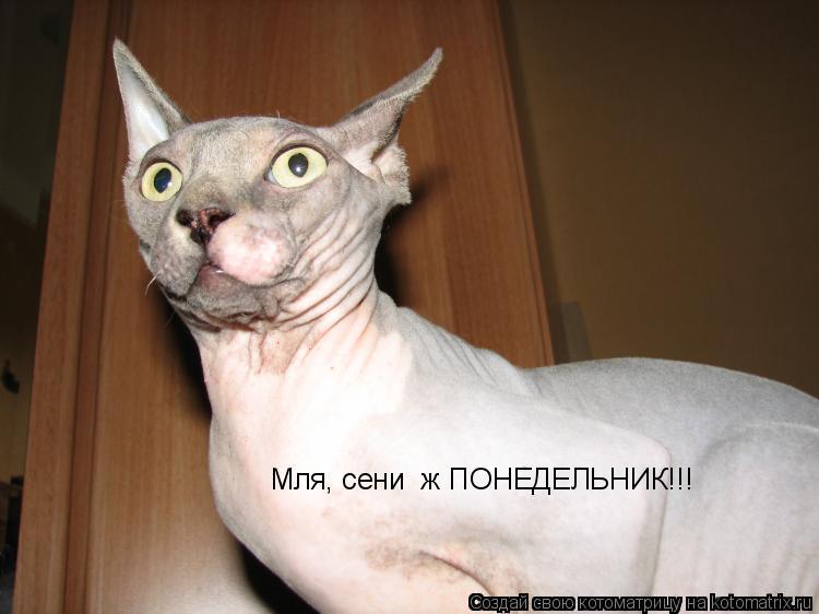 Котоматрица: Мля, сени  ж ПОНЕДЕЛЬНИК!!!