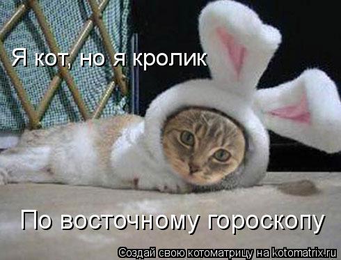Котоматрица: Я кот, но я кролик По восточному гороскопу