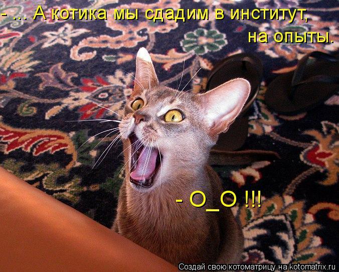 Котоматрица: - ... А котика мы сдадим в институт,  на опыты. - О_О !!!