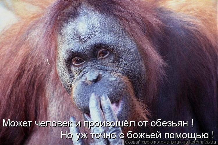 Котоматрица: Может человек и произошёл от обезьян ! Но уж точно с божьей помощью !