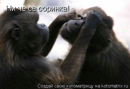Котоматрица: Ни че се соринка!