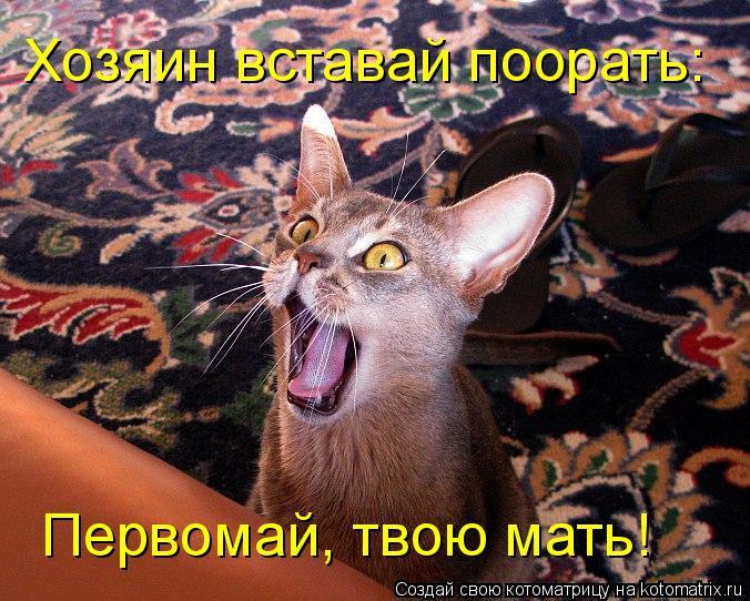Котоматрица: Хозяин вставай поорать: Первомай, твою мать!