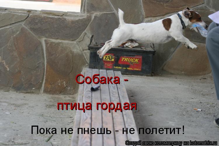 Котоматрица: Пока не пнешь - не полетит! Собака -  птица гордая