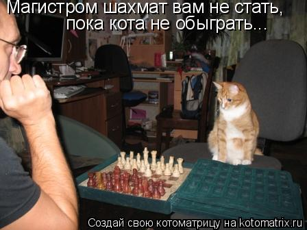 Котоматрица: Магистром шахмат вам не стать,  пока кота не обыграть...