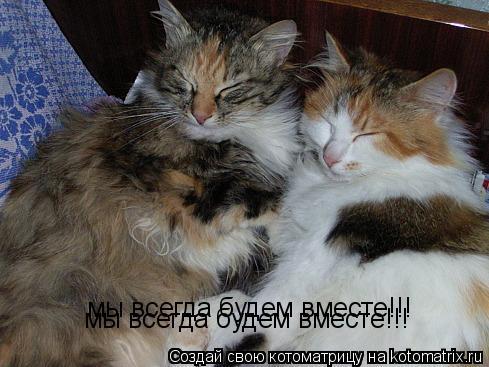 Котоматрица: мы всегда будем вместе!!! мы всегда будем вместе!!!