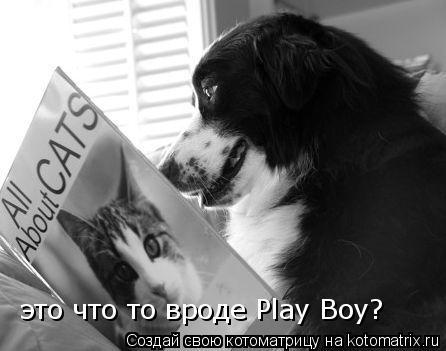 Котоматрица: это что то вроде Play Boy?