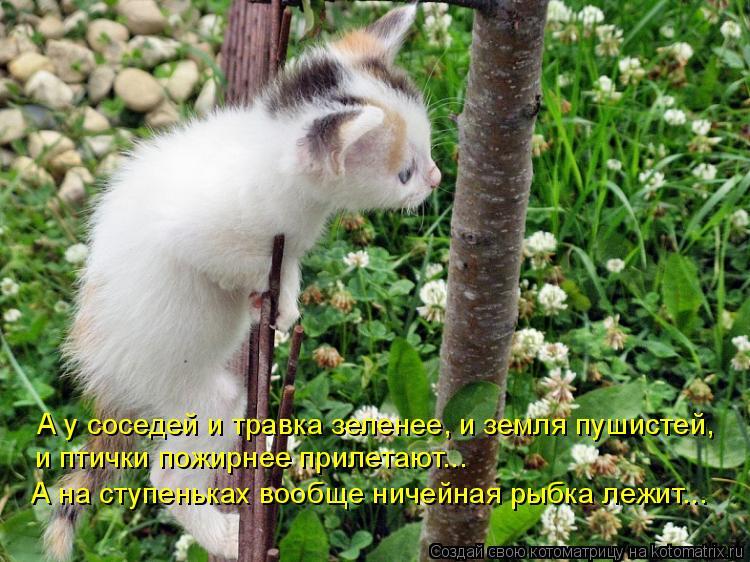 Котоматрица: А у соседей и травка зеленее, и земля пушистей, и птички пожирнее прилетают... А на ступеньках вообще ничейная рыбка лежит...
