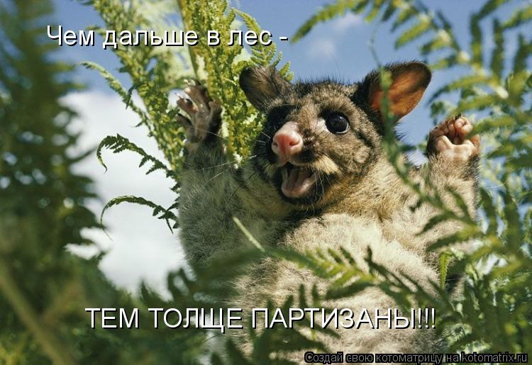 Котоматрица: Чем дальше в лес - ТЕМ ТОЛЩЕ ПАРТИЗАНЫ!!!