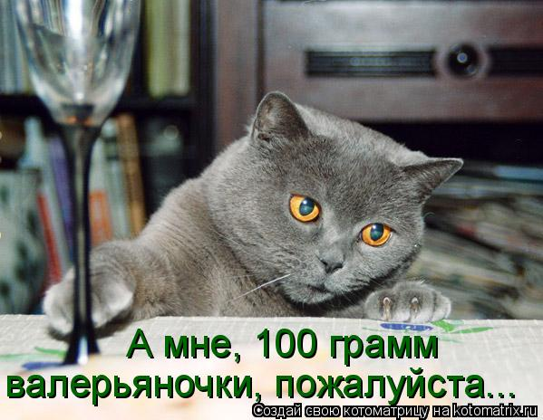 Котоматрица: А мне, 100 грамм  валерьяночки, пожалуйста...