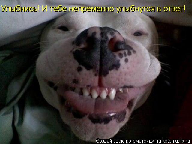 Котоматрица: Улыбнись! И тебе непременно улыбнутся в ответ!