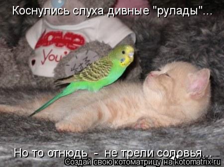 """Котоматрица: Коснулись слуха дивные """"рулады""""... Но то отнюдь  -  не трели соловья..."""